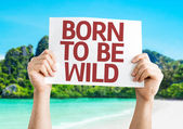 Born to be Wild card — Stockfoto