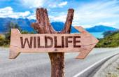 Wildlife wooden sign — Stock Photo