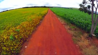 Soybean Plantation in Goias — Stock Video