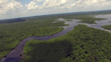 Amazon rainforest in Brazil — Stock Video