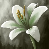Digital panting flower lily white — Foto Stock