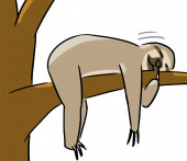 Cartoon animal expression sloth lazy — Stockfoto