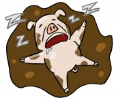 Cartoon animal expression pig sleep — Stockfoto