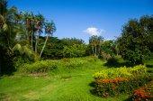 Belo jardim — Foto Stock