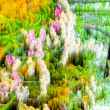 Abstract blur background and soft colorful nature — Stock Photo #67078665