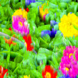 Abstract blur background and soft colorful nature — Stock Photo #67078735