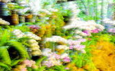 Abstract blur background and soft colorful nature — Stock Photo