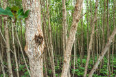 Landscape of Wood  at mangrove forest — Stock Photo