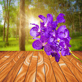Violet orchid flower on wood plank with colorful blur nature bac — Stock Photo