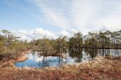 Swamp view with trees and lake — Stock Photo