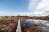 Swamp view with trees and boardwalk — Stock Photo