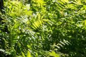 Green foliage details — Stock Photo
