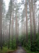 Natural rural landscape — Stock Photo