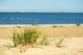 Beach view with plants in water and blue sky — Stock Photo