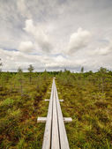 Swamp view wtih lakes and footpath — Stock Photo