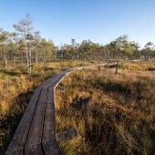 Sentier en bois sur la tourbière — Photo
