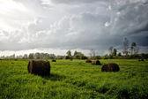 Meadow in the rain — Stock Photo