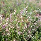 Closeup of beautiful green grass with blur background — Stockfoto
