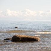 Rocky beach in the baltic sea — Stock Photo