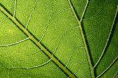 Leaf macro pattern of green — Stock Photo