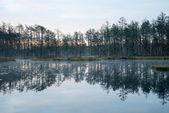 Riflessi nelle acque del lago — Foto Stock
