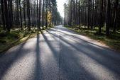 Morning sun beams over autumn road — Stock Photo