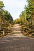 Country gravel road in the forest — Stock Photo