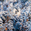 First winter frost in the country — Stock Photo #57218579