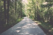 Slightly lit road in the forest. Vintage. — Stock Photo