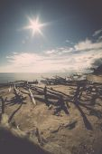 Beach skyline with old tree trunks in water. Vintage. — Stock Photo