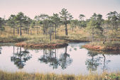 Beautiful tranquil landscape of misty swamp lake. Vintage. — Stock Photo