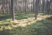 Morning sun beams in the autumn forest. Vintage. — Stock Photo