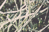 Close up photo of frosty morning grass, chilling morning. Vintag — Stock Photo