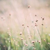 Closeup of beautiful green grass with blur background. Vintage. — Stock fotografie