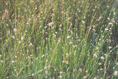 Closeup of beautiful green grass with blur background. Vintage. — Stock Photo
