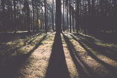Morning sun beams in the autumn forest. Vintage. — 图库照片