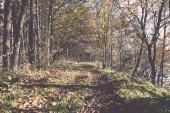 Autumn colored tourism trail in the woods. Vintage. — Fotografia Stock