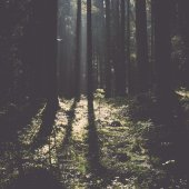 Forest road with sun rays in the morning. Vintage. — Stock Photo