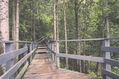 Scenic and beautiful tourism trail in the woods near river . Vin — 图库照片
