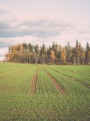 Green field with trees in the country. Vintage. — Stock Photo