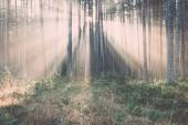 Beautiful light beams in forest through trees. Vintage. — Stock Photo