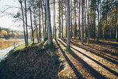Autumn colored tourism trail in the woods. Retro grainy film loo — Stockfoto