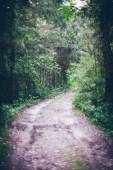 Forest road with sun rays in the morning. Retro grainy film look — Stock Photo