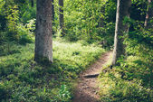 Scenic and beautiful tourism trail in the woods near river . Ret — Stock Photo