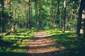 Scenic and beautiful tourism trail in the woods near river . Ret — 图库照片