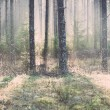 Beautiful light beams in forest through trees - retro, vintage — Stock Photo #60083237