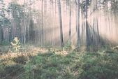 Beautiful light beams in forest through trees - retro, vintage — Стоковое фото