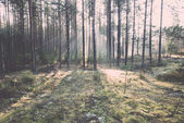 Beautiful light beams in forest through trees - retro, vintage — Zdjęcie stockowe
