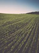 Beautiful freshly cultivated green crop field - retro, vintage — Stock Photo