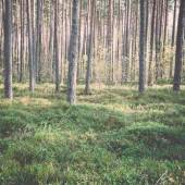 Morning sun beams in the autumn forest - retro, vintage — Stock Photo